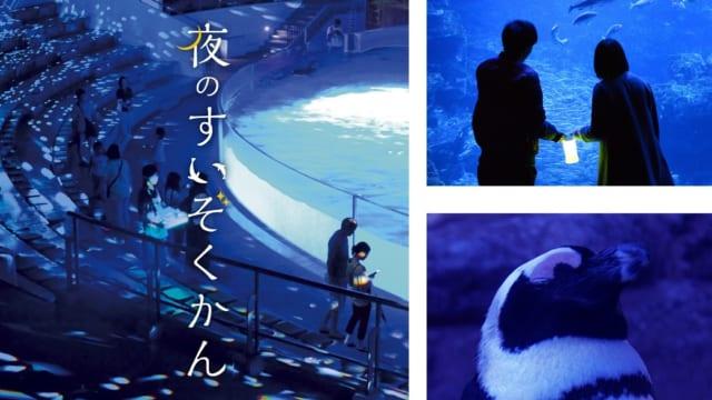 【京都水族館】ゴールデンウィーク10日間は夜8時まで楽しめる「夜のすいぞくかん」を開催